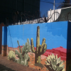 Thumbnail image for Desert Cactus and Prickly Pear ~ 23rd & K Alley